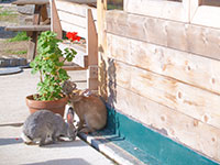 i conigli della baita prunno asiago