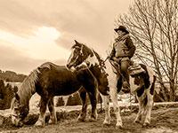 Cavalli e panorama col del vento