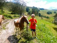 Ai pony non si nega mai una carezza