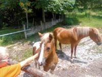 Incontro ravvicinato con i nostri pony