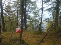 Boschi orienteering