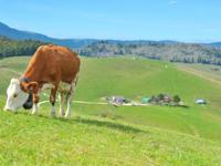 Die Weiden und die Landschaft von Malga I Lotto Valmaron