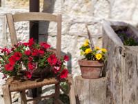 In Malga Larici di Sotto sind Blumen überall