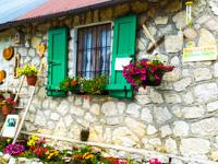 Blumen, Details und Farben im Malga Larici di Sotto