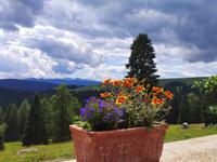 Die schöne Aussicht von Malga Larici
