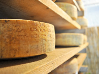Käse Asiago DOP gewürzt