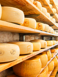Käse aus Pennar Molkerei in Asiago