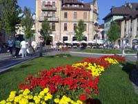 fiori gran caffe adler