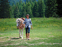 Passeggiata con cavallo presso rifugio campolongo