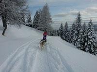 Slitta con cani sulla neve rifugio val formica