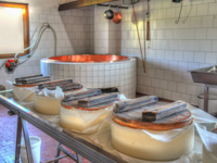 Production of Asiago Dop at the Malga Dosso below