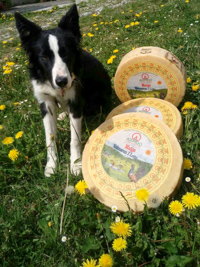 Cheese Asiago Dop by Malga Valmaron I Lotto