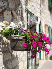 Flowers in pot at Malga Larici di Sotto