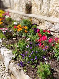 The colorful flowers of Malga Larici
