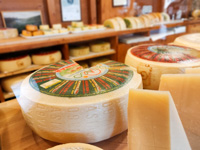 Asiago Dop cheese for sale at cooperative trade