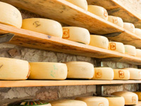 Cheese forms Asiago Dop of the Pennar Dairy