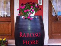 Raboso fiore