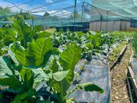 Seasonal organic products at Km 0