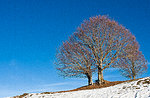 MONTAGNA NUOVA:Ciaspolata Guidata Naturalist con GUIDE ALTOPIANO-27 dicembre2016