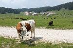 Naturforscher geführte Mountainbike Tour Camporosà-Rotzo Samstag 4 Juli