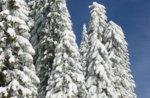 Schneeschuh-Wanderung/Tour-Defensive Kaserne Broken-Januar 24, 2015