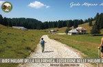 ANDAR PER MALGHE:Val Formica Escursione con GUIDE ALTOPIANO - 23 luglio 2019