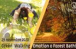 FOREST BATHING oder GREEN WALKING EMOTION: Emotionaler Spaziergang, 29. November 2020