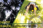 GREEN WALKING EMOTION o Forest Bathing passeggiata emozionale, 20 giugno 2020