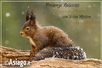 presenze nascoste guide altopiano asiago