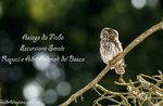 RAPACI e ALTRI ANIMALI, escursione naturalistica GUIDE ALTOPIANO, 19 maggio