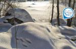 Emozioni in natura: a caccia di tracce - Domenica 5 gennaio 2020