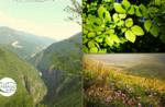 Emotionen in der Natur: Col dei Remi - Sa 4. Juli 2020