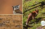 Emotionen in der Natur: Tierbegegnungen bei Sonnenuntergang - Samstag, 7. November 2020 von 15.30 bis 19.00 Uhr