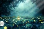 Emotionen in der Natur: Laternenglühwürmchen - Sa 18 Juli 2020