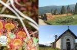 Emozioni in Natura: le torbiere di Marcesina - Sab 18 luglio 2020