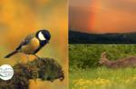 Emozioni in natura: incontri al tramonto - Sab 25 Luglio 2020