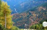 Emozioni in Natura tra i larici dorati  Domenica 8 Novembre 2020 dalle 9.30