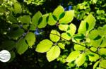 Emozioni in natura tra i boschi di faggio  - Lunedì 17 Agosto 2020