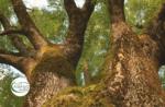 Emotionen in freier Wildbahn: Jagd auf monumentale Bäume - Donnerstag, 20. August 2020 von 9.30 bis 13 Uhr