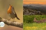 Emotionen in freier Wildbahn: Sonnenuntergangsbegegnungen - Freitag, 21. August 2020 ab 18 Uhr