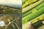 Wandern mit Geschmack: Rubbio Sellerie - Dienstag 8 September 2020
