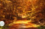 Emotionen in der Natur: Laub bei Sonnenuntergang - Sonntag 11 Oktober 2020 ab 16.30 Uhr