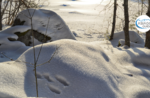 Emotions in Nature: animal tracks in winter Sunday 13 December 2020