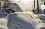 Emotionen in der Natur jagd auf Tracks - Sonntag 17 Januar 2021 ab 9.30 Uhr