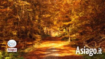 23 10 2021 asiago foliage asiago guide