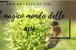 Il magico mondo delle api: visita e laboratorio - Domenica 5 Agosto 2018