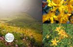 Emotionen in der Natur: das Gras des Hl. Johannes - So 21 Juni 2020