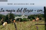 La Magia del Bosco- con spuntino- Domenica 12 Agosto 2018