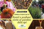 Ronzii e profumi: visita al giardino delle api- Domenica 18 agosto 2019