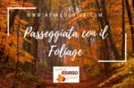 Gehen Sie mit Laub-Sonntag 14 Oktober 2018